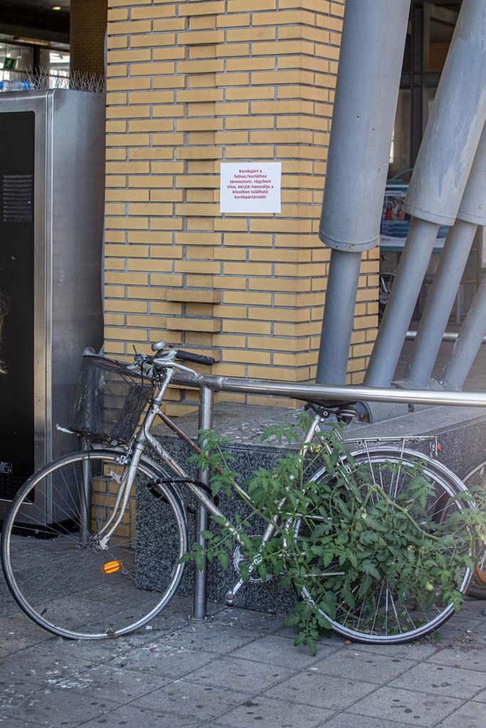 Ez a bringa bizony gyökeret eresztett