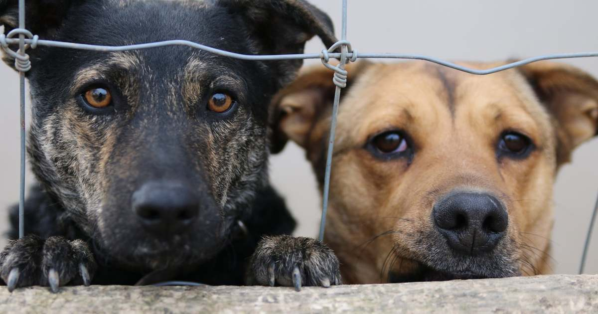 Új kutya a háznál: hogy szoktasd össze a már meglévő négylábúval?