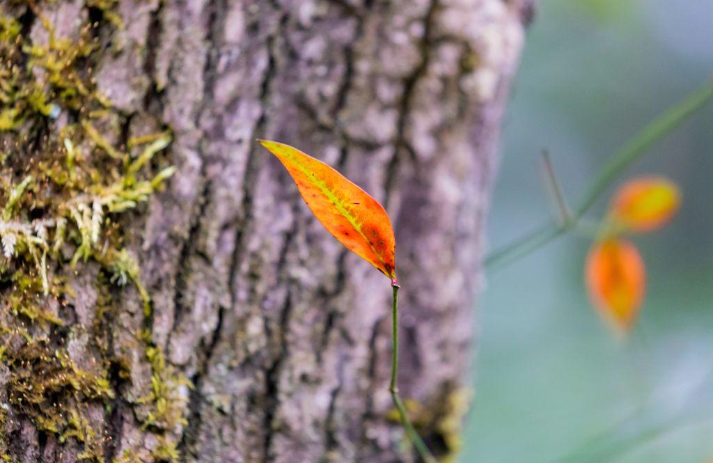 ősz, falevél